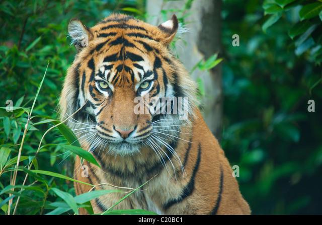 Chester Zoo, Cheshire, England, UK - Stock Image