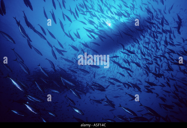 Looking up towards sea surface to silhouette of boat through clear water and schooling fish Aldermen Islands New - Stock Image