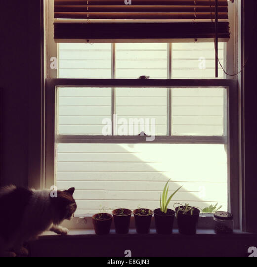 Cat on window sill with plant pots - Stock Image