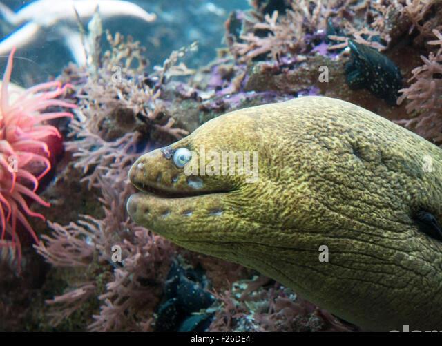 Shedd Aquarium Fish Stock Photos Shedd Aquarium Fish