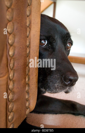 Timid dog. - Stock Image