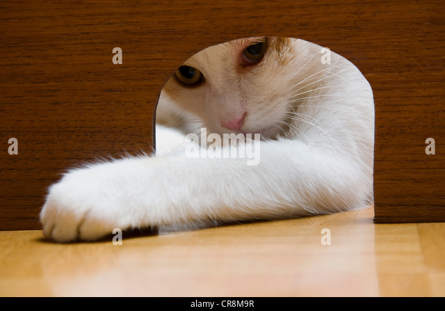 Cat reaching paw through mouse hole - Stock Image
