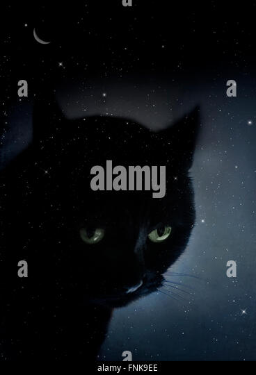 black cat in the starry night - Stock Image