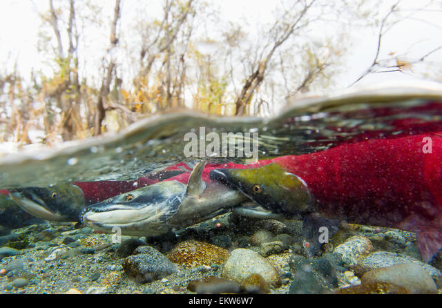 Biting fish stock photos biting fish stock images alamy for Where are the fish biting near me