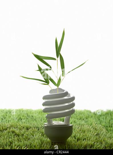 Fluorescent light bulb in grass - Stock Image