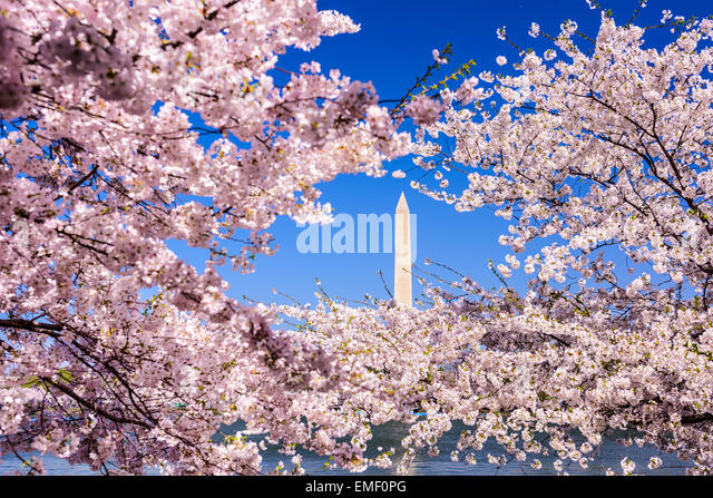 Washington, D.C. view of Washington monument from the Tidal Basin during spring. - Stock Image