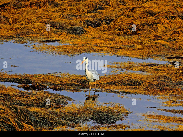 Wadding stock photos wadding stock images alamy for Koi pool blackpool