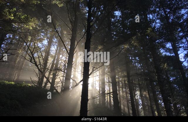 Foggy sun rise in forest - Stock Image