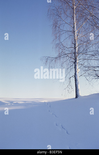 Peaceful winter scene - Stock Image