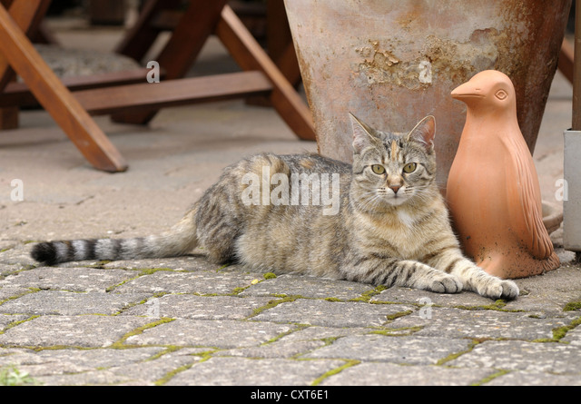 Tabby cat lying in front of a clay figure - Stock Image