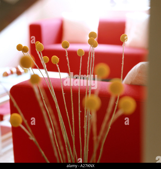 Detail of dried plant heads in interior with red sofas - Stock Image