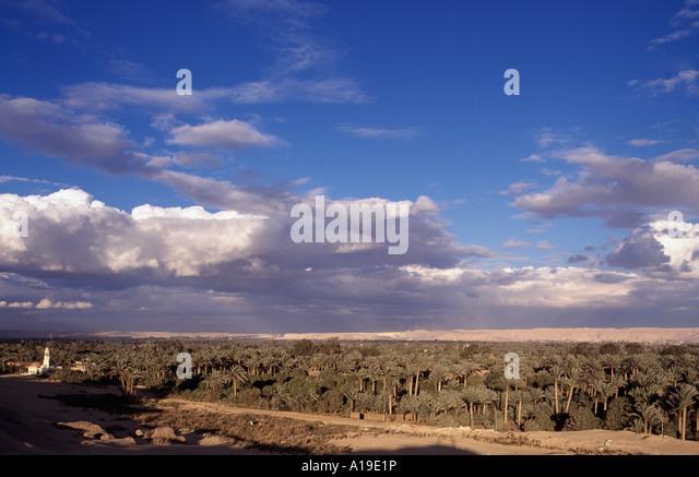 Egypt, Cairo, Saqqara oasis - Stock Image