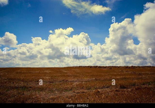 English farmland landscape - Stock Image