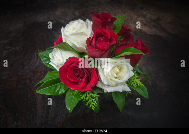 red and white rose in dark tone - Stock Image