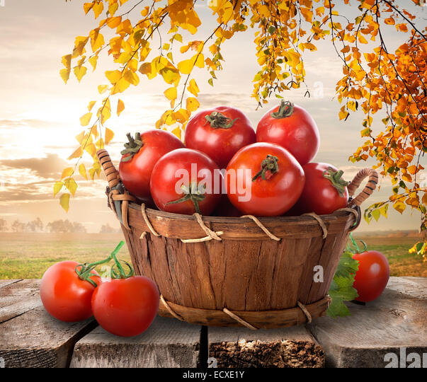 Ripe tomatoes in a basket on a nature background - Stock Image