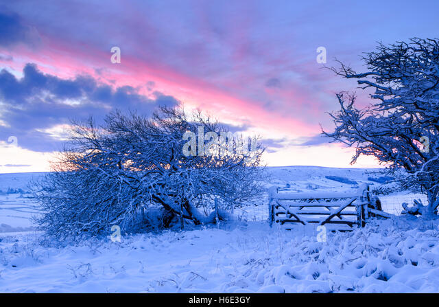 Winter snowfall on hawthorn trees and field gate at daybreak in Danby Dale, in North York Moors national park - Stock Image