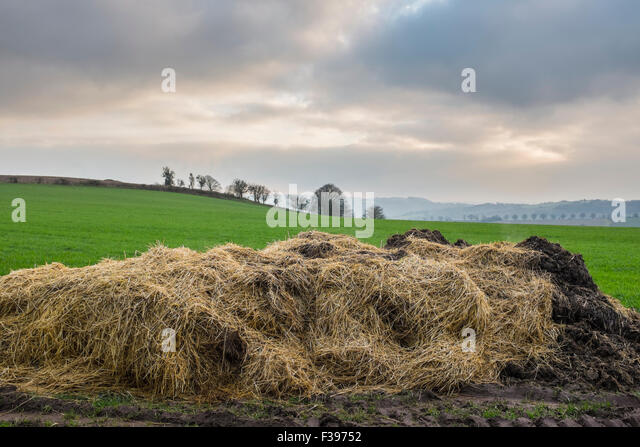 Pile of steaming silage on a welsh farm. - Stock Image
