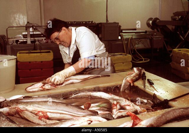 Fish industry in Scotland Woman gutting fish - Stock-Bilder