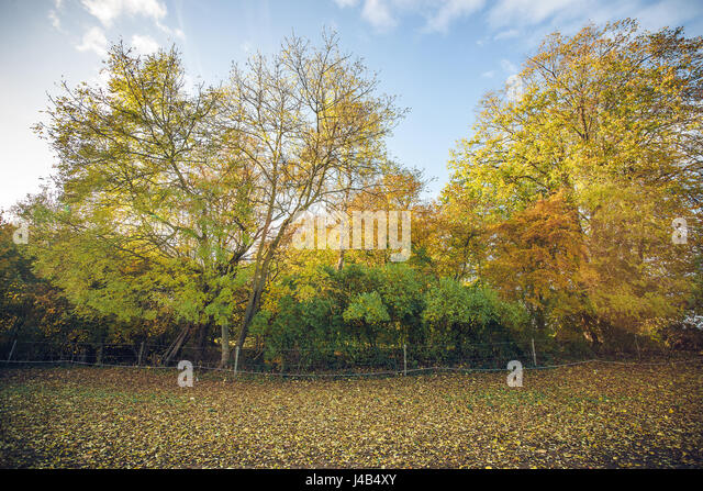 Colorful trees in a rural environment in the fall with an electrical fence on a field with autumn leaves - Stock Image