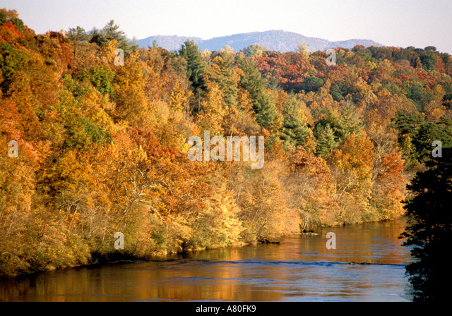Fall autumn colors tree colorful leaves - Stock Image