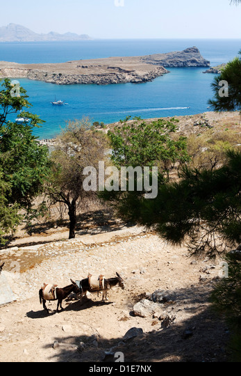 Two donkeys in the St. Paul Bay, Lindos, Rhodes, Dodecanese, Greek Islands, Greece, Europe - Stock Image