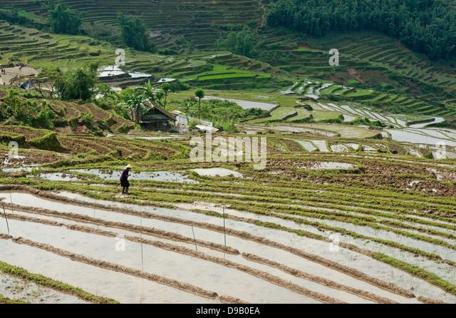 Sapa region, North Vietnam -  Rice fields - Stock-Bilder
