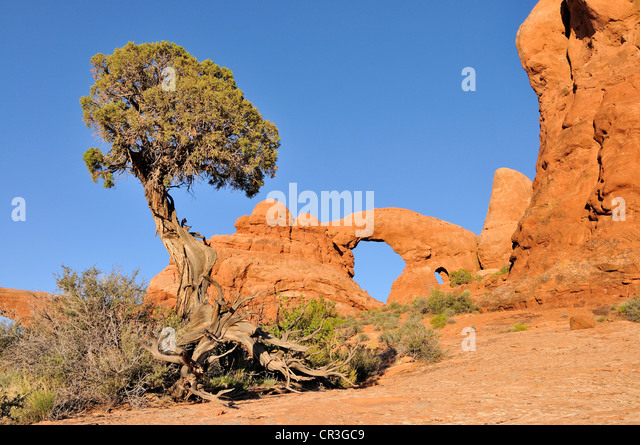 Grosvenorarchgrandstaircase further X together with Utah Juniper Juniperus Osteosperma Turret Arch Rock Bridge Or Natural Cr Gc together with Kodachrone Sb L moreover . on natural arch kodachrome