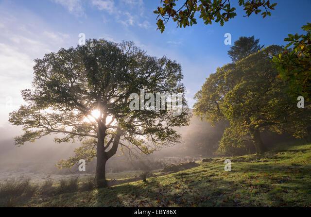 Morning sunshine burning through mist, Lake District, Cumbria, England. Autumn (November) 2013. - Stock Image