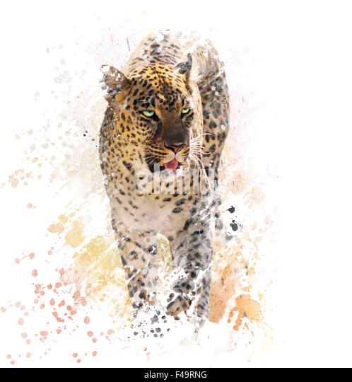 Digital Painting of Leopard on White Background - Stock Image