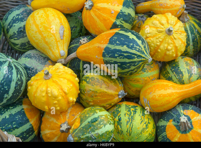 Mixed squashes on display in a wicker basket - Stock-Bilder
