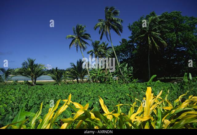 South pacific Fiji Vitu Levu Nanani I Ra palm trees - Stock Image