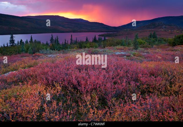 Sunset over Wonder Lake, Denali National Park, Alaska. - Stock Image