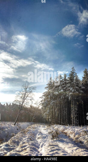beautiful winter landscape in forest - Stock Image