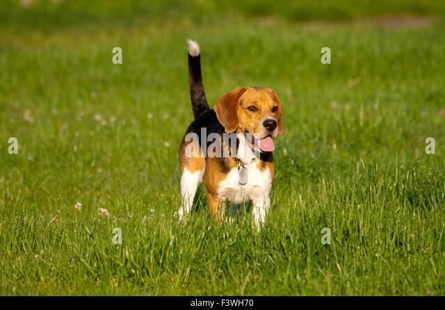 Bell Branch Dog Park