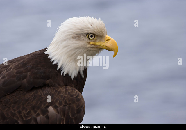 Mature bird
