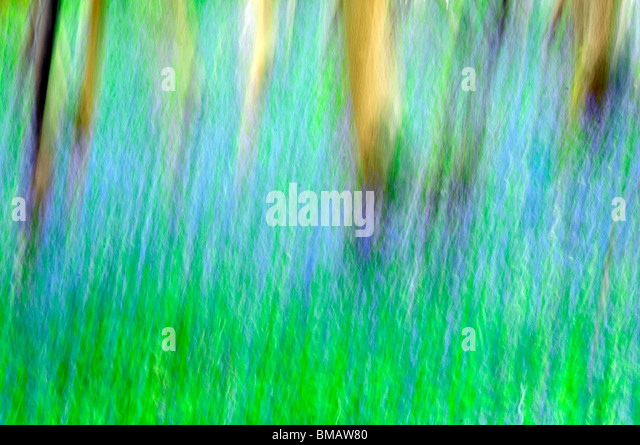 abstract impressionist view of bluebelle woods - Stock Image