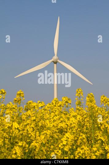 Wind energy plant in a rape field - Stock Image
