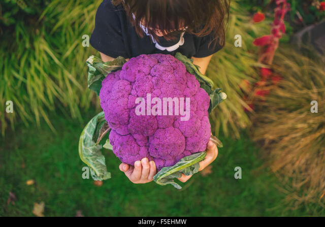 Elevated view of girl holding large purple cauliflower - Stock Image