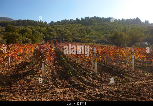 vineyard vines farm wineyard rural peasant ground soil earth humus brown - Stock Image