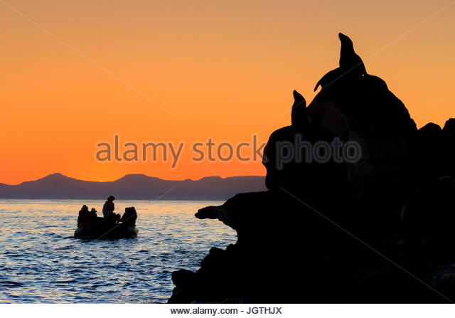 Tourists take a Zodiac cruise at sunrise in Espiritu Santo Archipelago National Park. - Stock Image