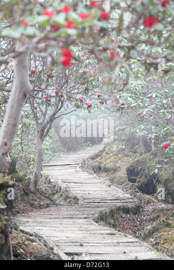 Nature Trails Geochala Trek. - Stock Image