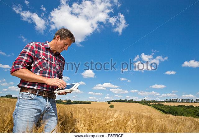 Farmer using digital tablet in sunny rural barley crop field in summer - Stock-Bilder