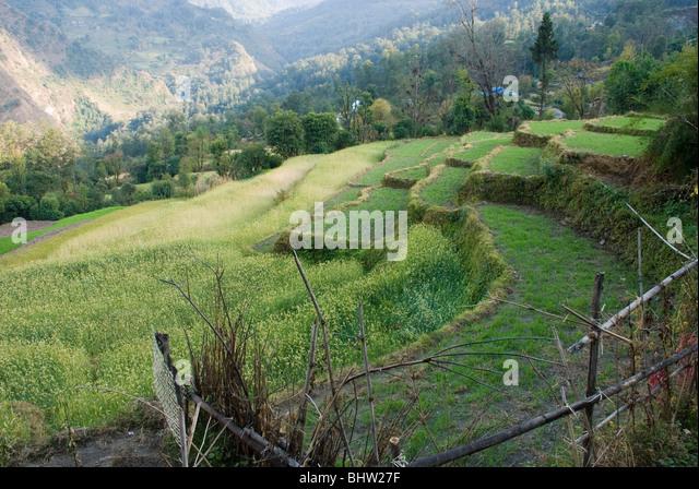 Jomsom trek stock photos jomsom trek stock images alamy for Terrace farming model