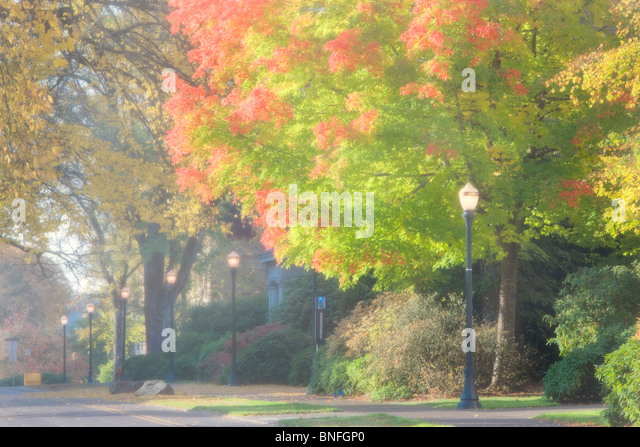Road through campus with fall color. Oregon State University. - Stock Image