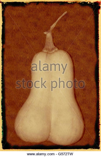 Artistic shot of a butternut squash. - Stock Image
