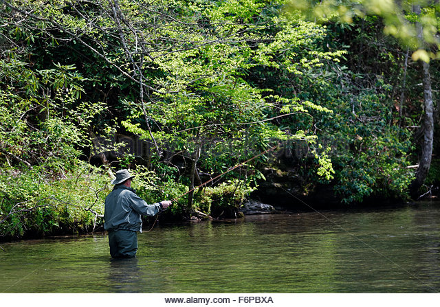 Man Fly Fishing in the Little River, Great Smoky Mountains National Park, Tennessee. - Stock Image