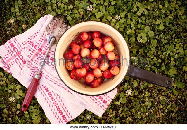 Pot of Cherries - Stock-Bilder
