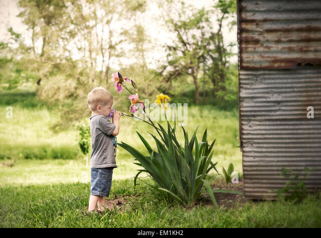 child smelling Iris flowers by barn - Stock Image