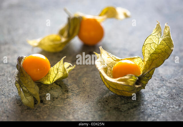 grouping of 3 physalis berries with delicate papery husk on green marble - Stock Image