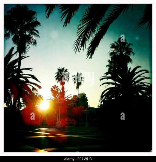 Sunset and palm trees - Stock Image